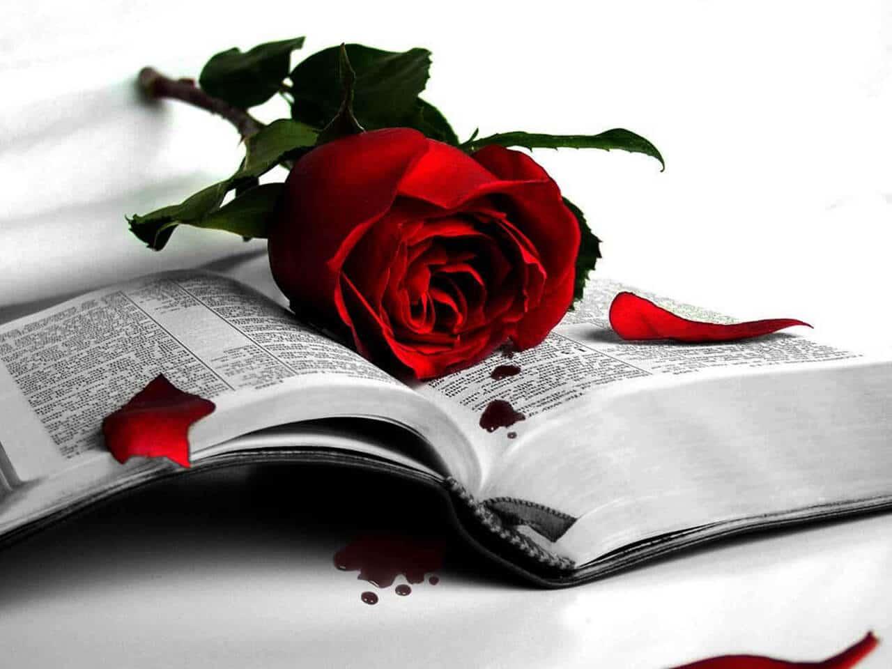 стихотворения и проза поэта и писателя Данила Рудого